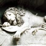 Ultimos momentos de vida de un león adulto