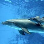 Nacimiento de un delfín
