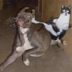 Unos gatos graciosos