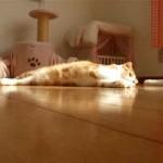 Gato acosado por cochecito eléctrico