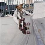 Perros patinando
