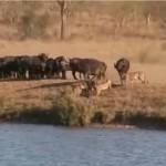 Batalla de Kruger