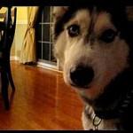 La perra habladora Mishka dice Obama