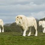 Escenas de animales salvajes (HD)