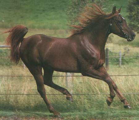 Video de caballos salvajes
