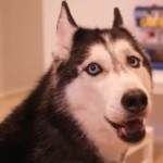 La perra habladora Mishka dice Supercalifragilisticoexpialidoso