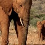 Elefantes pasando el día