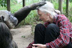 Chimpancés Salvajes de Jane Goodall