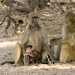 Interacción social entre monos