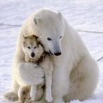 Osos polares y perros jugando