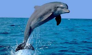 Videos delfines: bailando con delfines