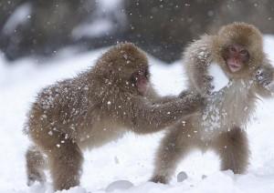monos nieves