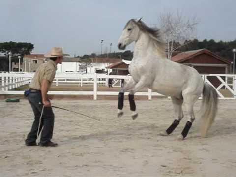 Videos Caballos: Doma natural de caballos. Rafa y Snoopy