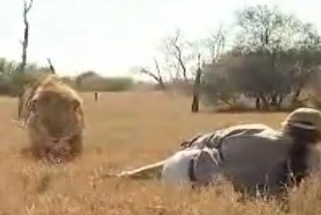 Hombre cara a cara con un león