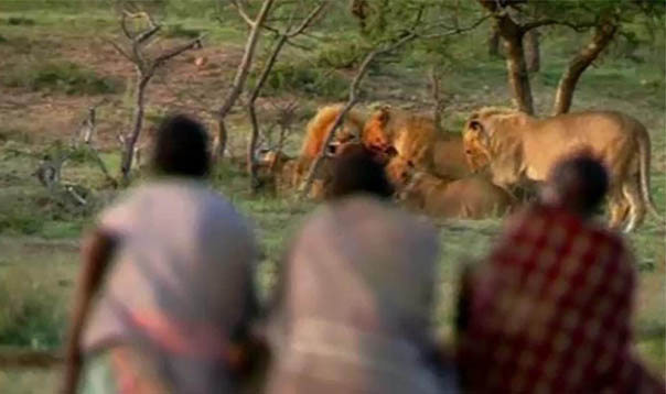 Tres hombres robando comida a leones