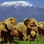 Documental online: Los mamíferos