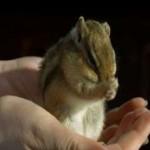 Alucinante vídeo de una Ardilla Listada en Slow motion