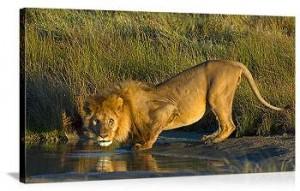leon bebiendo