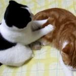 Videos gatos: masaje amoroso