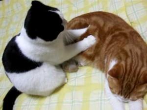 Gatos masaje