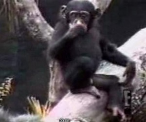 mono huele dedo culo