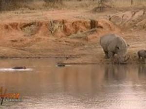 rinoceronte hipopotamo