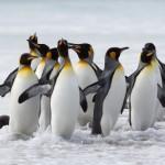 Video de animales de la Antártida (Last Ocean 2011)