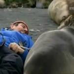 Elefantes marinos y el periodista