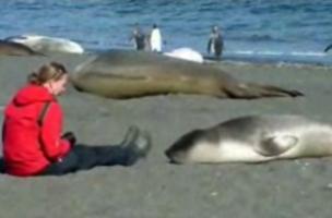Una foca se enamora de una mujer