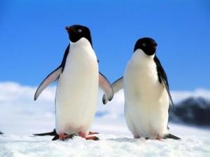 Pinguino Antartida