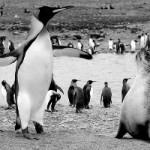 Video de animales de la antártida