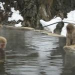 Spa de los Monos de las nieves de Japón