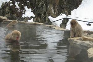monos de las nieves spa