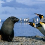 Video de animales en la Antártida (Warren Webber)