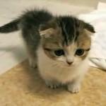 Lindo gatito en un mueble