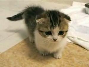 gato kitten