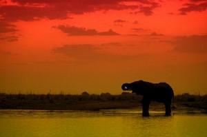 Serengueti elefante atardecer