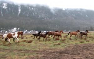 caballos salvajes galopando