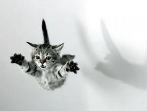 gato ninja volador