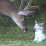 Snuggles el gato conoce a los ciervos