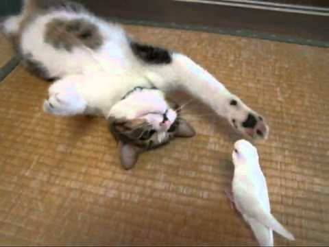 La amistad entre el periquito y el gato