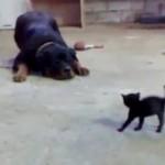 Pequeño gato valiente
