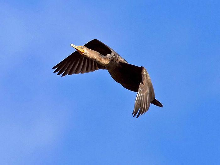 Video pájaros en cámara lenta (slow motion)