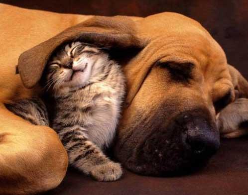 Perro y gato pelean por cama