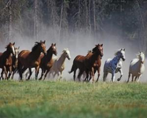 foto caballos salvajes