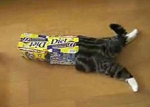 La gata Maru y las cajas de cartón
