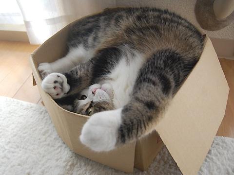 La gata Maru. Presentación.