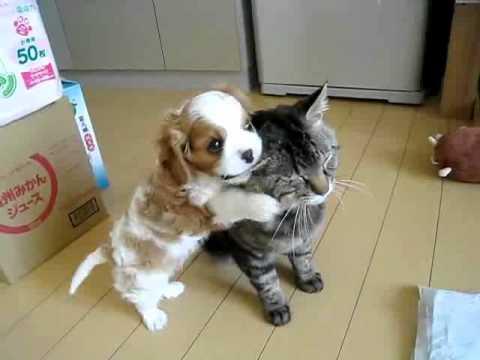 El gato más paciente del mundo
