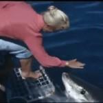 ¿Son los tiburones blancos animales pacíficos?