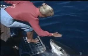 foto tiburon blanco valerie taylor
